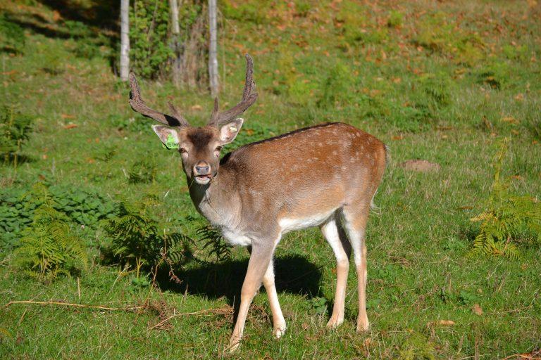 Hébergement insolite en Corrèze - Village des Monédières - animaux sauvages sur le domaine
