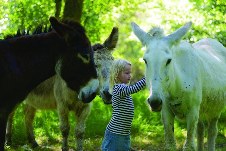 Hébergement insolite en Haute-Vienne - Les Ânes de Vassivière - les ânes