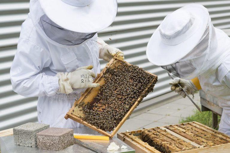 Découverte du métier d'apiculteur