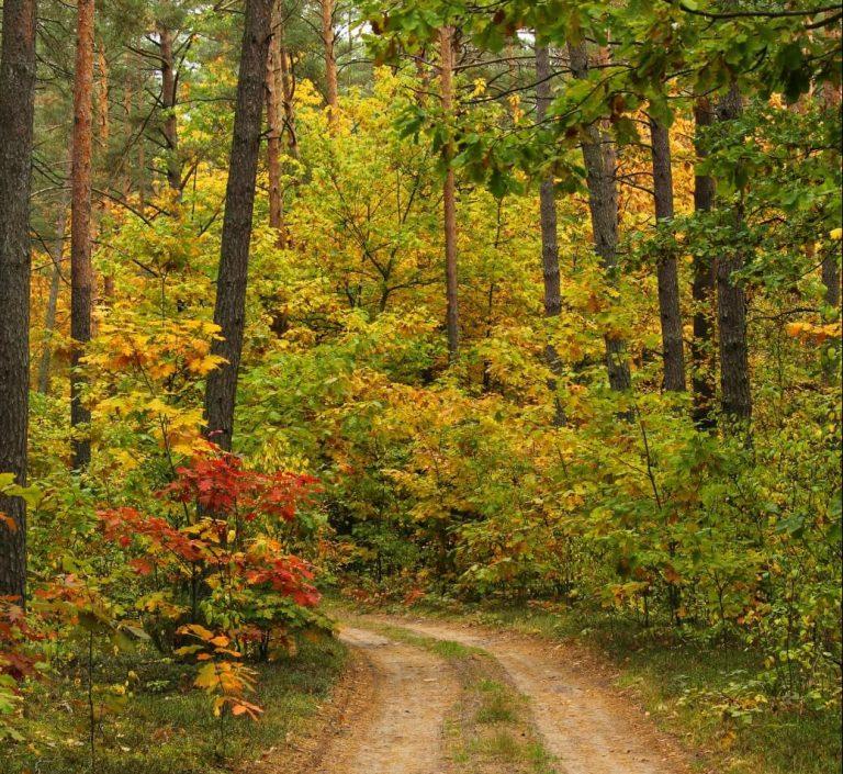 Automne dans le parc national de la Biebrza en Pologne